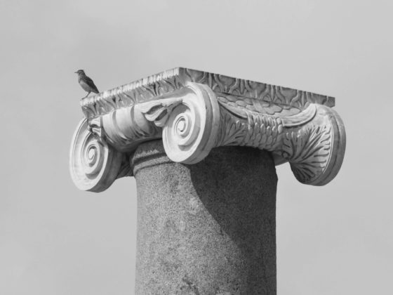 A bird standing on an historic Roman Column Head